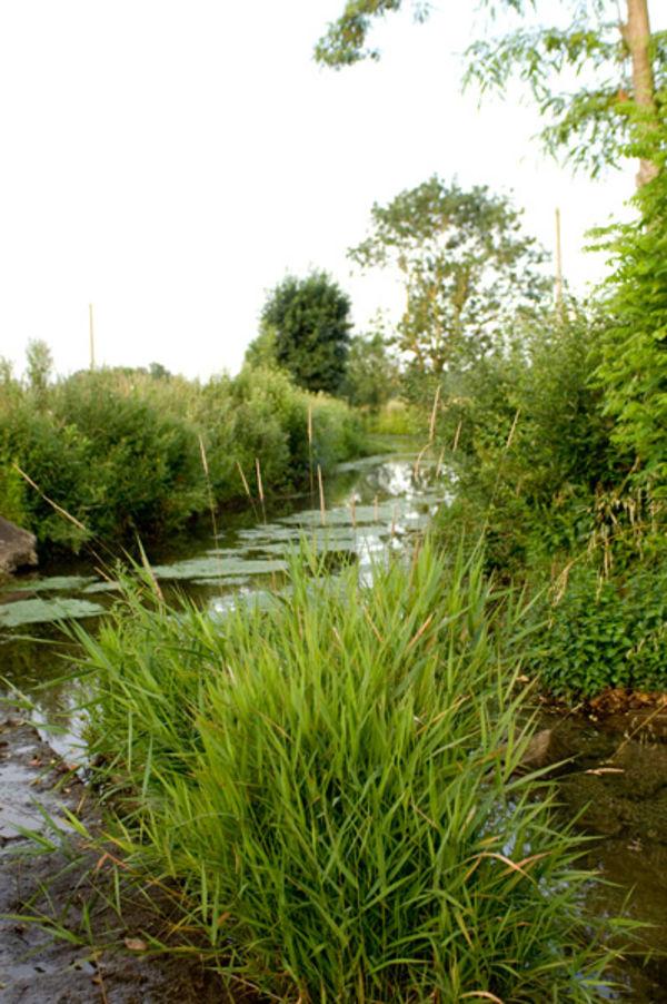 La Lambon à proximité de la source du Vivier ©Géo Buch Création
