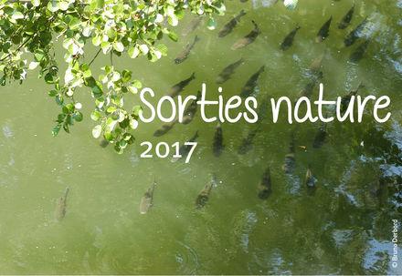 Sortie nature : Enjeux des zones humides du Lambon
