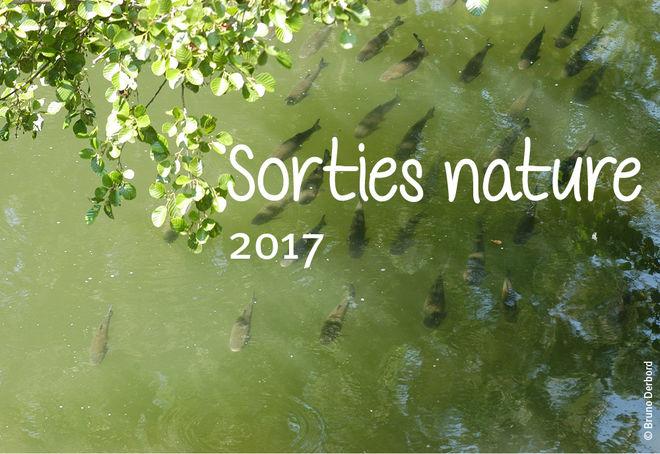 Sortie nature : Niort, ville étape des poissons migrateurs !