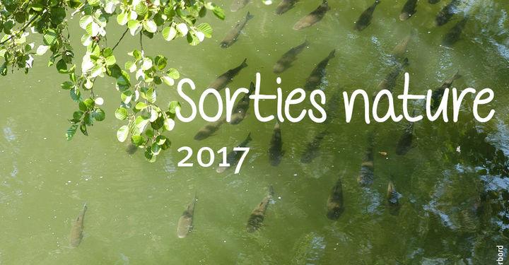 Poissons dans une rivière