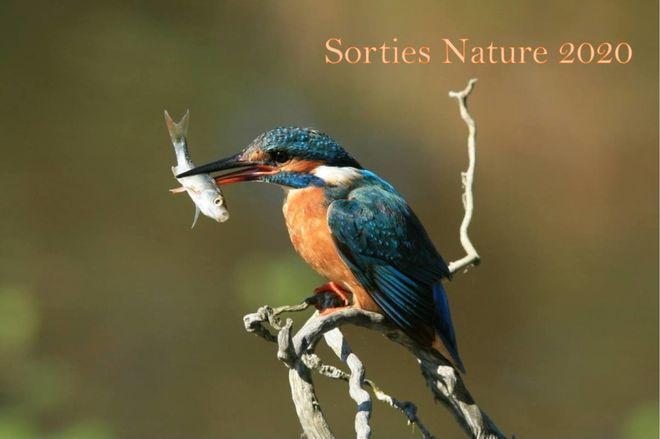 Sortie nature : à la recherche des migrateurs de la Sèvre Niortaise - Annulé