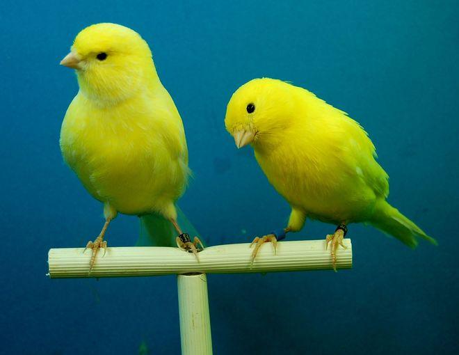 45e Salon des oiseaux