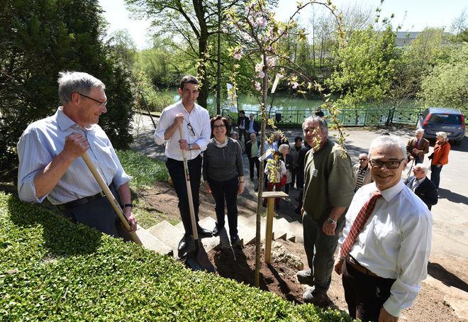 La plantation des 4 derniers arbres s'est déroulée vendredi 7 avril 2017, en présence des présidents des Lions Club niortais et du maire, Jérôme Baloge ©Bruno Derbord