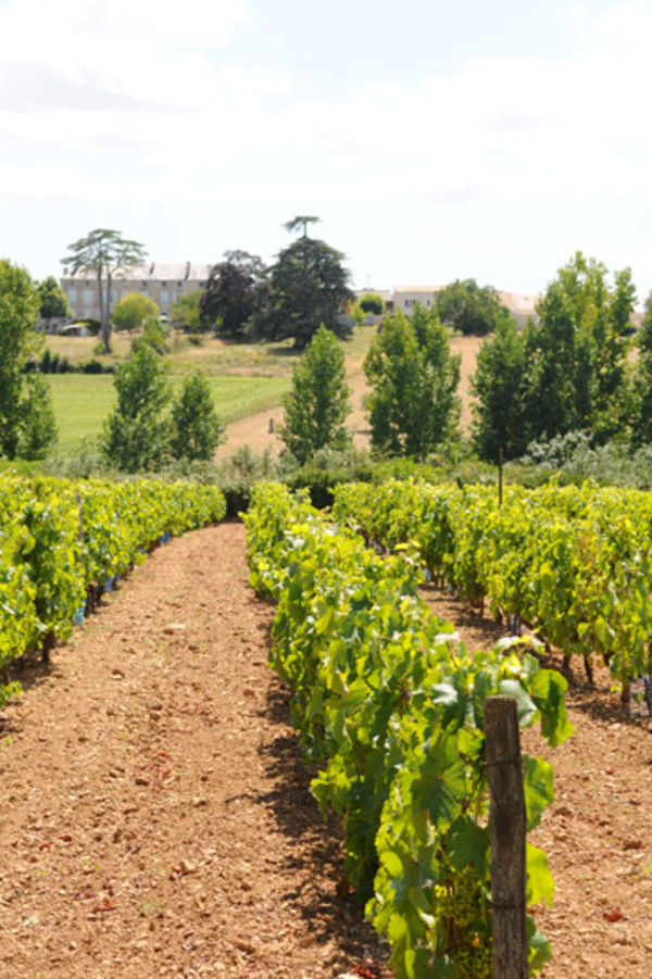 Les vignes de Souché © Eric Chauvet