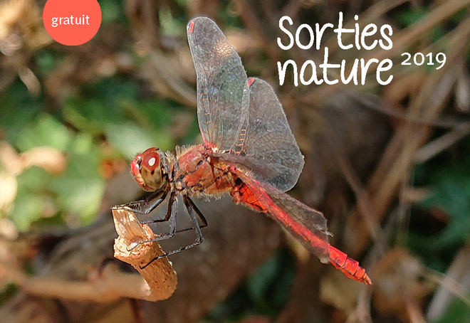 Sortie nature : Niort, ville étape des poissons migrateurs