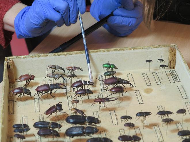 Accrochage - Dans les coulisses du musée : insectes à la loupe