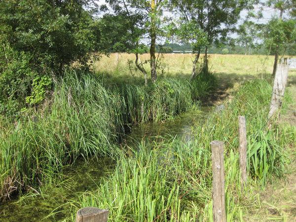 Point d'eau de la marais de la Plante ©DSNE