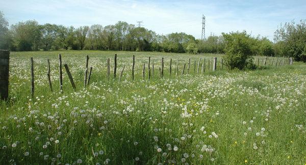Prairie du sud de Niort ©Anthony Le Fouler-DSNE