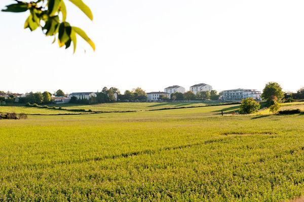 Le sud du quartier bordé de champs © Alexandre Giraud