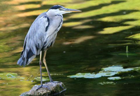 Illustration article : Le plan d'action biodiversité renouvelé