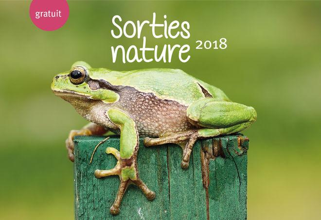 Sortie nature : des amphibiens dans la ville