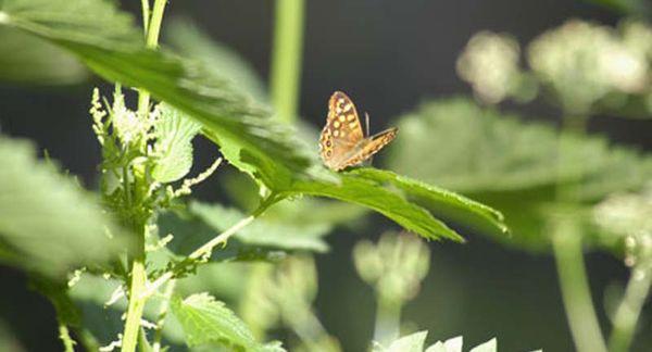 Macro d'un papillon sur des herbes
