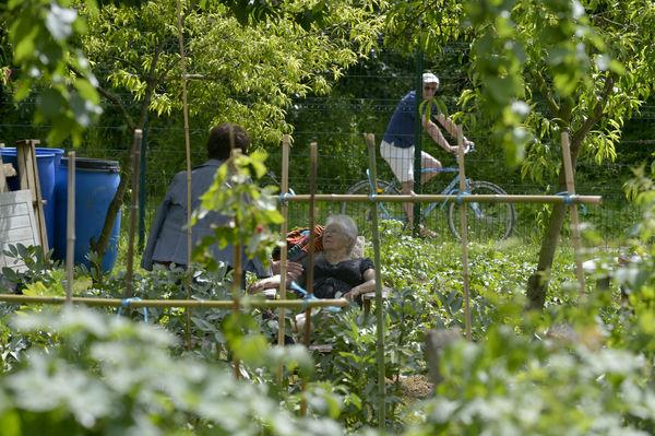 Coulée verte - jardins partagés du quai de Belle-Ile