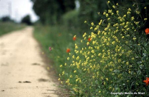 Fleurs au bord du parcours de la Tranchée