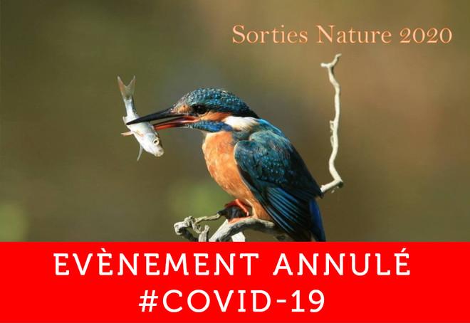 Sortie nature : reconnaitre les chants d'oiseaux