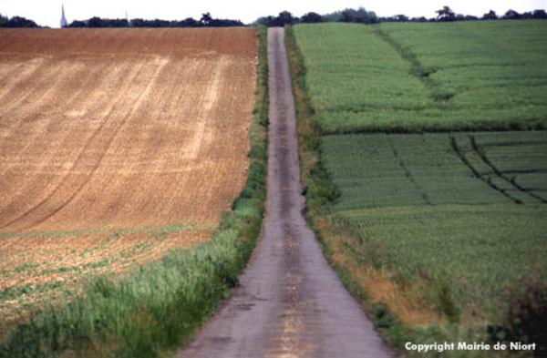 Chemin entouré par deux champs