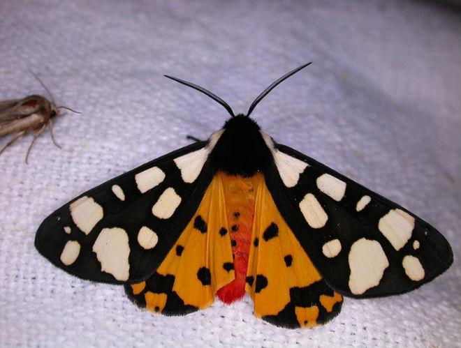 Nuit du papillon