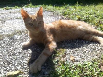 Chat trouvé à Niort
