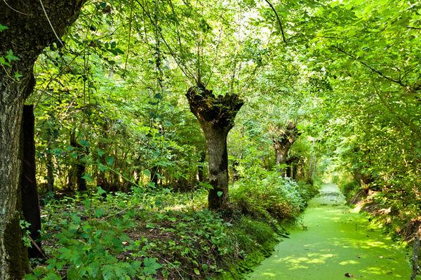 Marais de Galucher