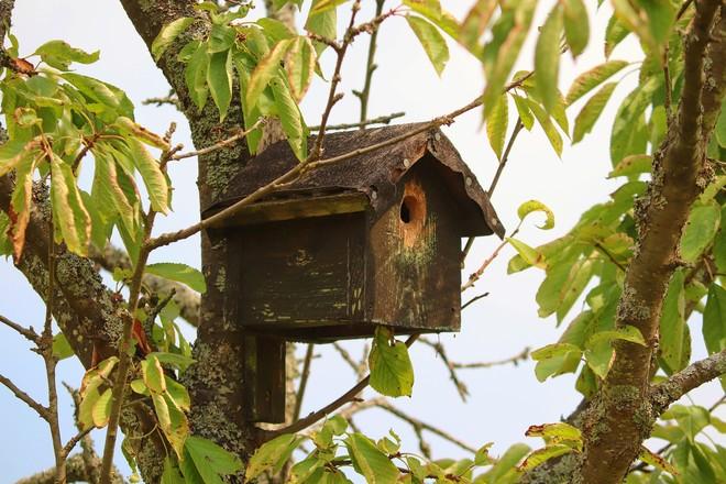 Atelier : Accueillir et protéger les oiseaux dans son jardin