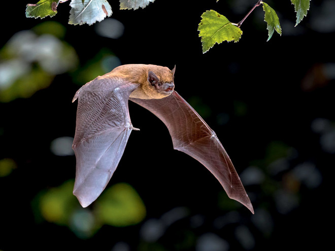 Sortie nature : à la découverte des chauves-souris