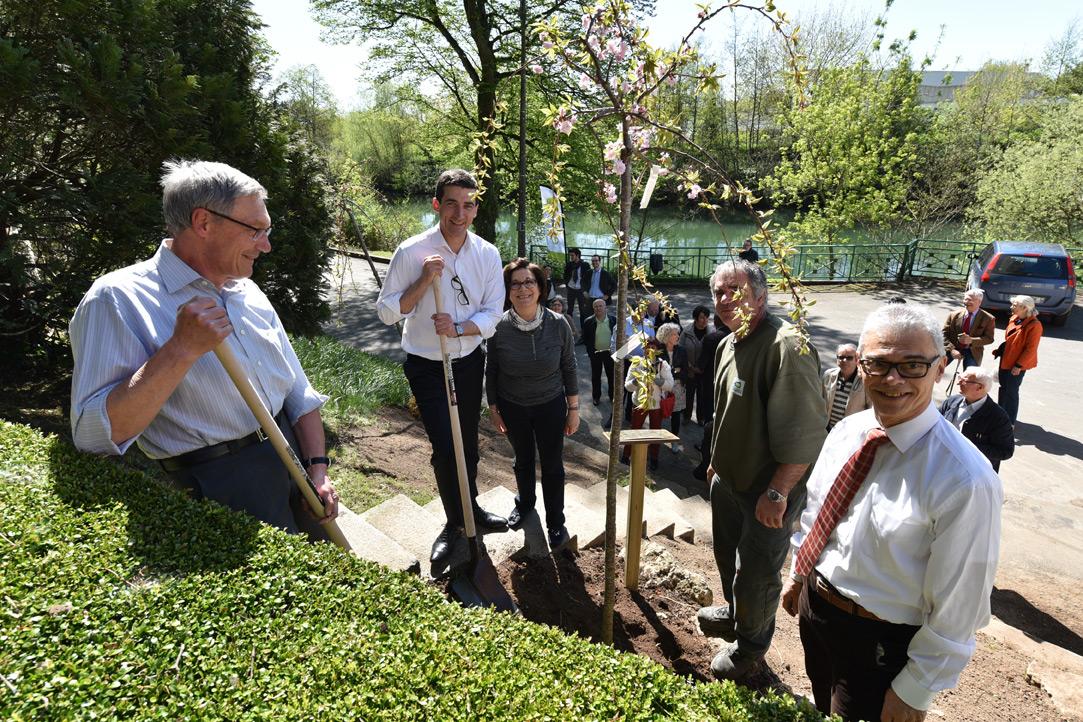 Des arbres exotiques pour le jardin des plantes mairie for Plantation de jardin