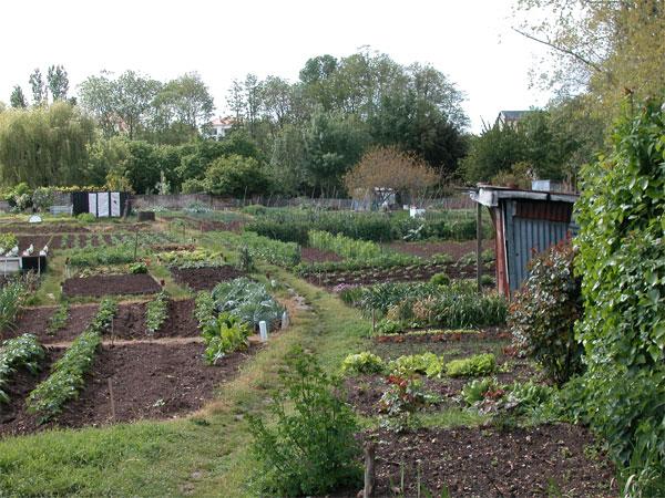 Rencontres aux jardins familiaux de la Société d'horticulture