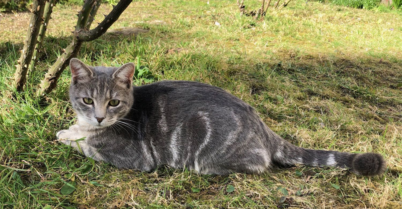 Vieux gris noir chatte vidéos xxx gonzon