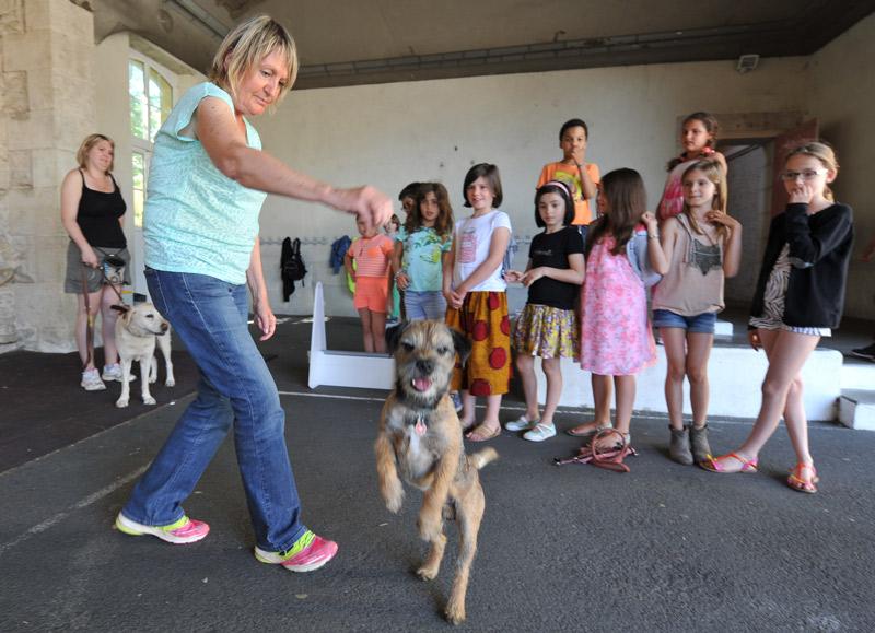 Initiation à l'éducation canine : Mairie de Niort