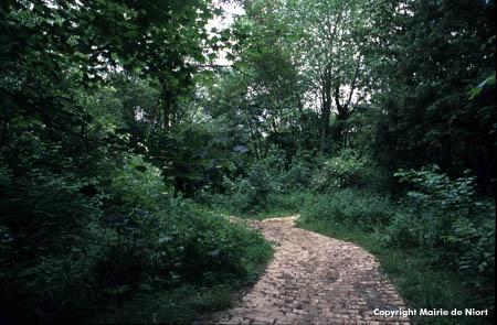 Sentier au coeur de la forêt