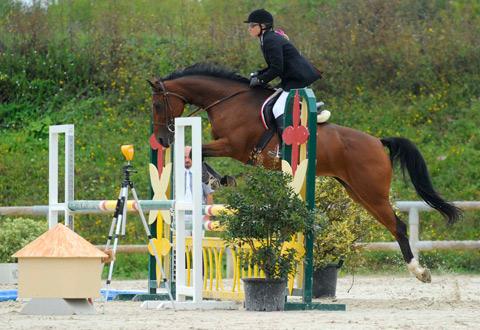 Concours de sauts d'obstacles et fête du cheval