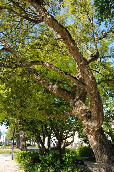 Sortie nature : Comme un arbre dans la ville