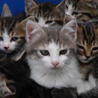 Salon du chiot et du chaton mairie de niort - Salon du chiot et du chaton ...