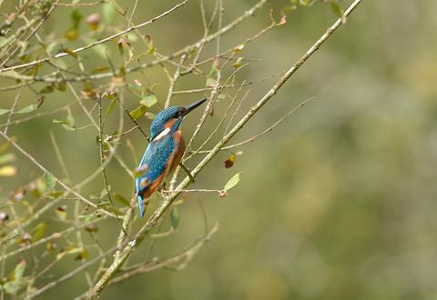 Les oiseaux des bords de rivières en Deux-Sèvres.